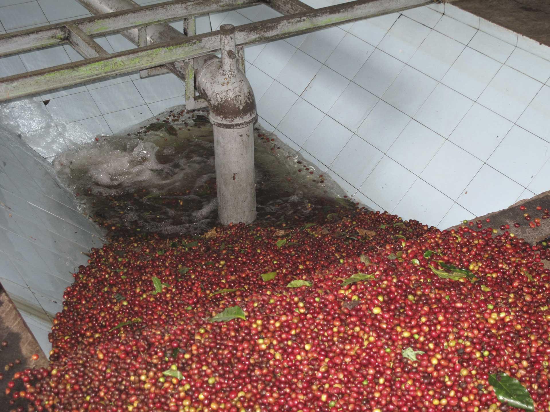 収穫された果実